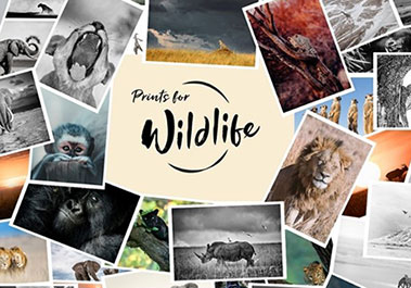 Teaserfoto Prints for Wildlife